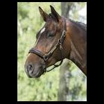 Lädergrimma Mountain Horse